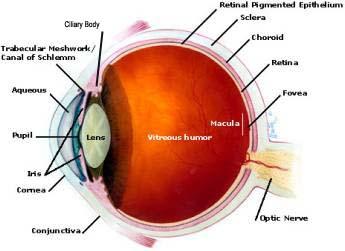 vision care harrow